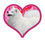 NSR Samoyed Heart Designs http://www.cafepress.com/dd/105029542