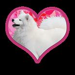 NSR Samoyed Heart Designs http://www.cafepress.com/dd/105029542